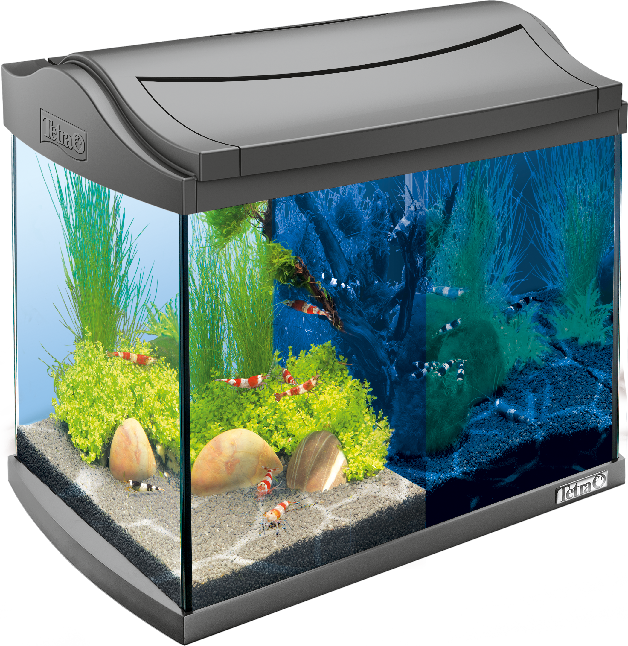 20l tetra aquaart led aquarium shrimps for Tetra fish tank