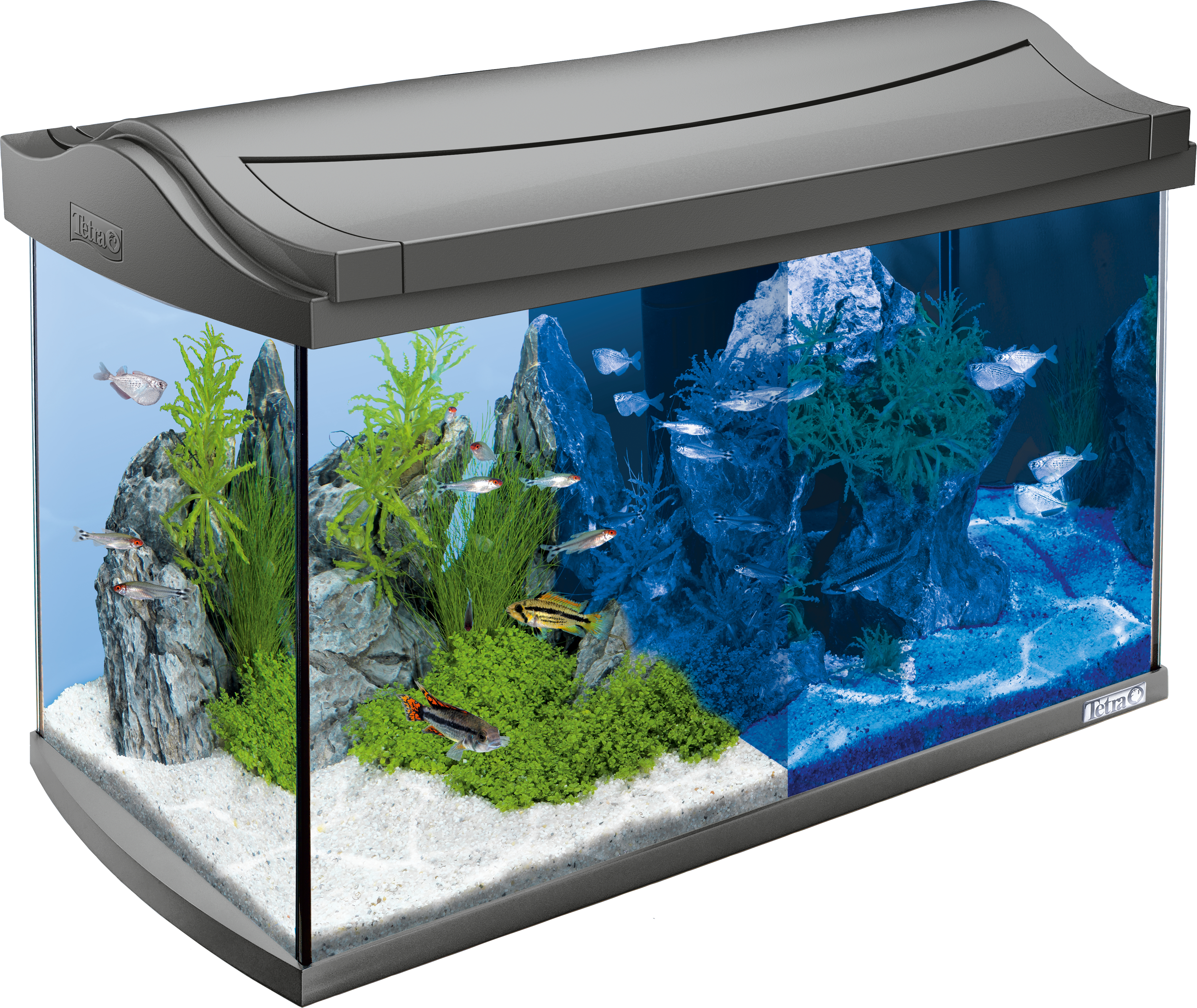 tetra aquaart led aquarium komplettset 60l. Black Bedroom Furniture Sets. Home Design Ideas
