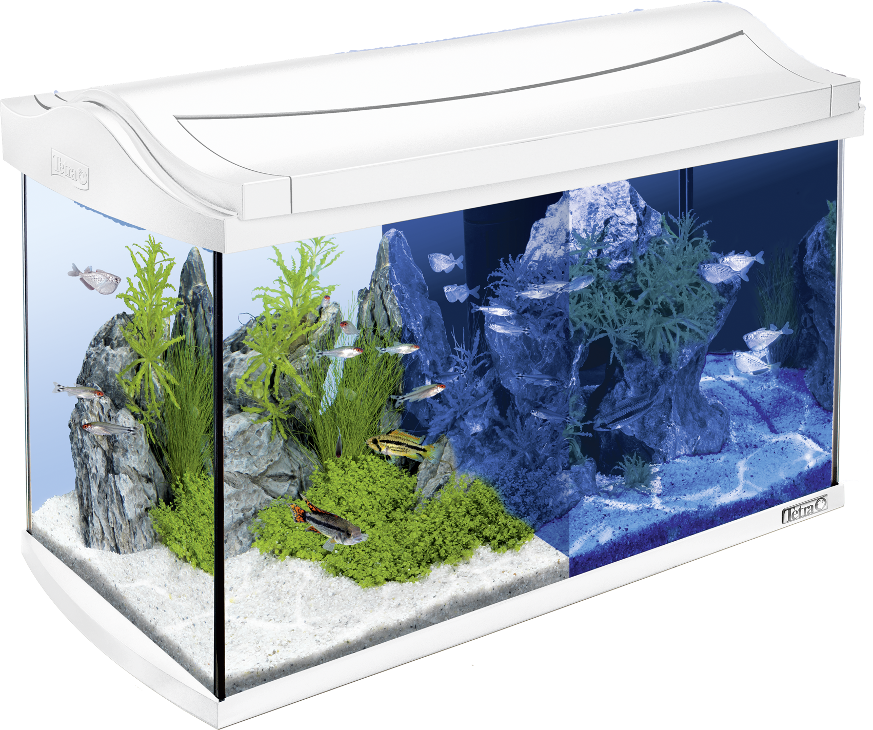 60l tetra aquaart led aquarium white. Black Bedroom Furniture Sets. Home Design Ideas