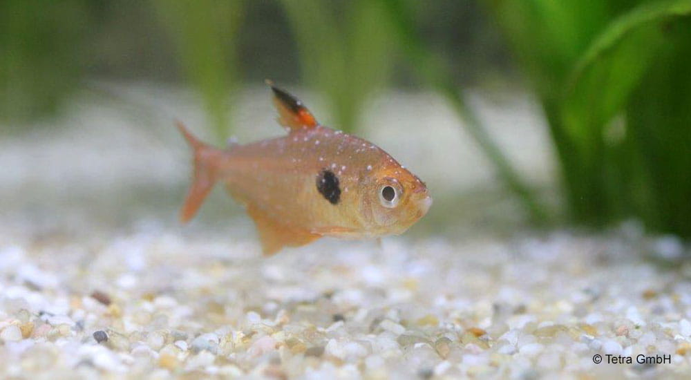 The Most Common Fish Diseases